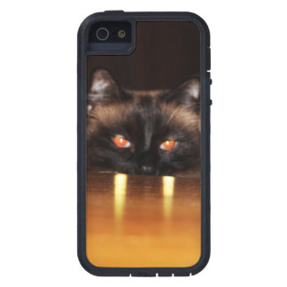 Niedlich, lustig, Vampirekatze Schutzhülle Fürs iPhone 5
