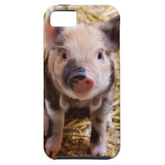 Niedliche Baby-Ferkel-Viehbarnyard-Babys iPhone 5 Etuis