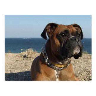 Niedliche Boxer-Hundepostkarte Postkarte