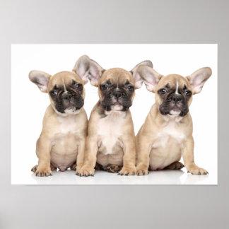 Niedliche kleine französische Bulldoggen Poster