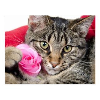 Niedliche Tabby-Katze mit Rose Postkarte