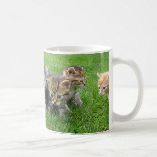 Niedliche unschuldige Kätzchen-Kaffee-Tasse Tasse