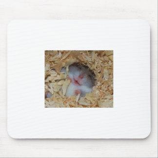 Niedlicher Hamster-lächelnde Nase und Mauspad
