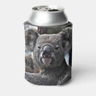 niedlicher Koala