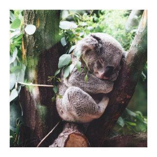Niedlicher Koala-Bär, der in einem Baum sich Leinwand Drucke
