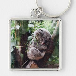Niedlicher Koala-Bär, der in einem Baum sich Schlüsselanhänger