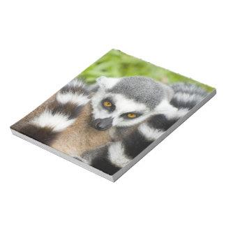 Niedlicher Lemur Stripey Schwanz Notizblock