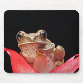 Niedlicher, lustiger Frosch, der auf Lilie - Mauspad