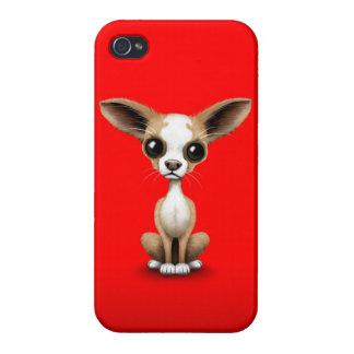 Niedlicher neugieriger Chihuahua mit den großen iPhone 4 Hüllen