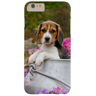 Niedlicher Tricolor Beagle-Hundewelpen-Haustier Barely There iPhone 6 Plus Hülle