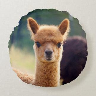Niedliches Baby-Alpaka-rundes Kissen