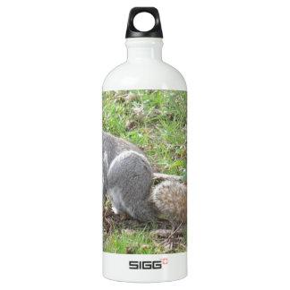 Niedliches Eichhörnchen-Verkratzen Aluminiumwasserflasche