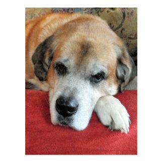Niedliches großes Hundeporträt Postkarte
