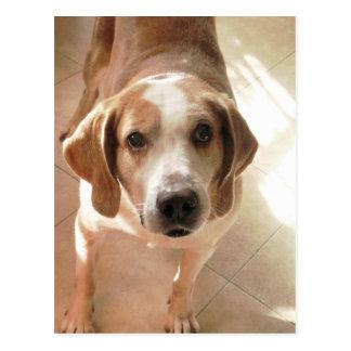 Niedliches Jagdhund-Hundeporträt-Foto Postkarte