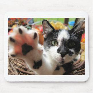 """Niedliches Katzen-Foto mousepad des Kitty-""""hohe"""