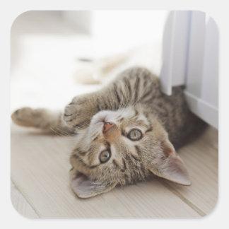 Niedliches kleines Kätzchen Quadratischer Aufkleber