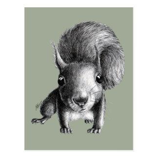 Niedliches neugieriges Eichhörnchen Postkarten