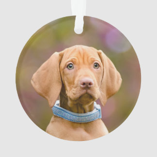 Niedliches puppyeyed Ungar Vizsla Ornament
