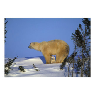 Nordamerika, Kanada, Manitoba, Churchill. 10 Fotografien