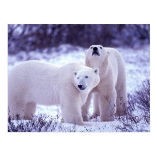 Nordamerika, Kanada, Manitoba, Churchill. 2 Postkarte