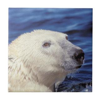 Nordamerika, nördlicher Polarkreis. Eisbär Keramikfliese