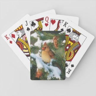 NordKardinal im Baum, Illinois Spielkarte