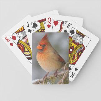 NordKardinalsfrau im gezierten Baum im Winter Spielkarten