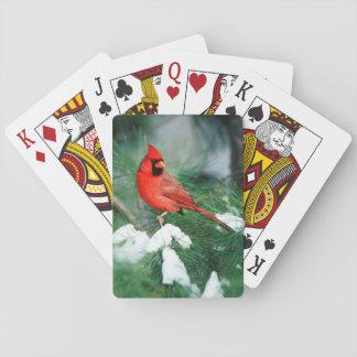 NordKardinalsmann auf Baum, IL Spielkarten