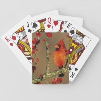 NordKardinalsmann gehockt, IL Pokerkarten