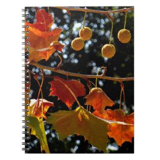Notizbuch/persönliche Zeitschrift - Platane und Spiral Notizblock
