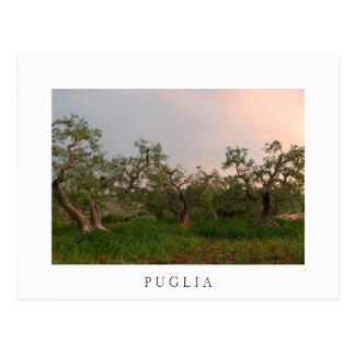 Olivenbaumwaldung an der postkarte