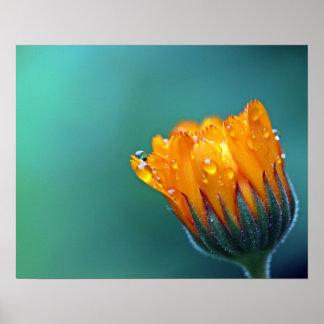 Orange Blume Poster