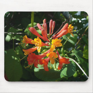 Orange Blumen des Woodbine-Geißblattes Mousepads