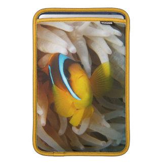 Orange Clown-Fische MacBook Sleeve