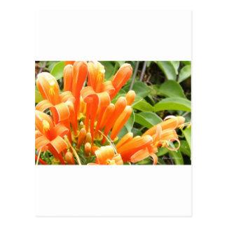 Orange Flower.jpg Postkarte