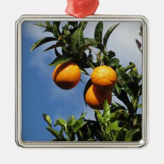 Orange Früchte, die am Baum gegen das Blau hängen Quadratisches Silberfarbenes Ornament