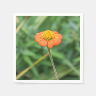 Orange Gänseblümchen Papierservietten