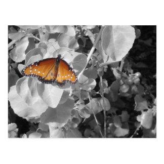 Orange Monarchfalter gegen Schwarzweiss Postkarte