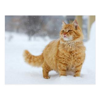 Orange Tabby im Schnee Postkarte