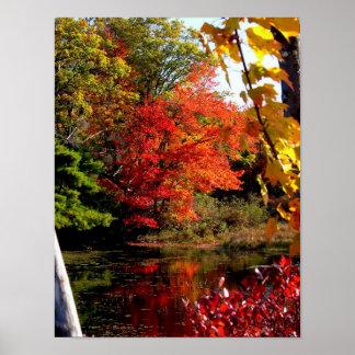 Orangenbaum-Herbstlaub-Fotografie-Plakat Poster