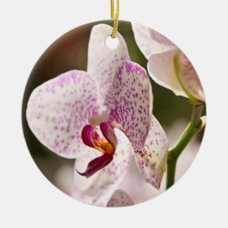 Orchideen durch Shirley Taylor Rundes Keramik Ornament