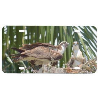 Osprey feilbietet Vögel Kfz-Kennzeichen US Nummernschild