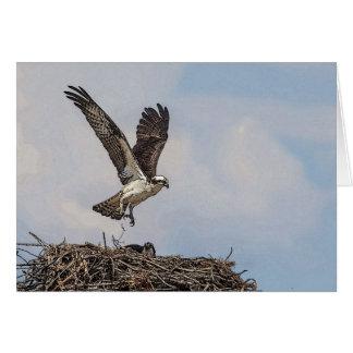 Osprey in einem Nest Karte