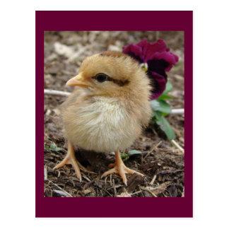 Ostern Küken-EIn-Dee-Licht Postkarte