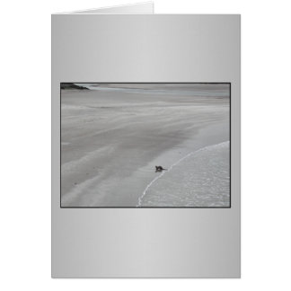 Otter auf einem Strand in Irland Grußkarte