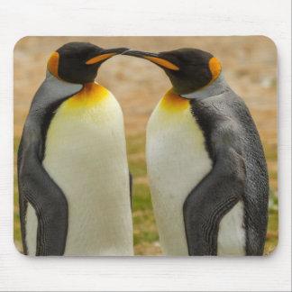 Paare von König Pinguine, Falkland Mousepads