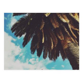 palm tree postkarte
