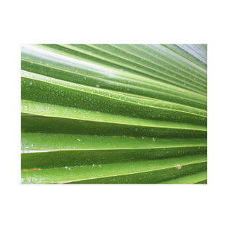 Palme im Regen Leinwanddruck