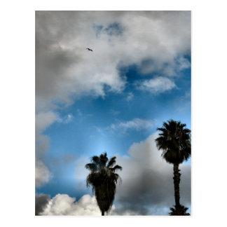 Palmen und Himmel Postkarte