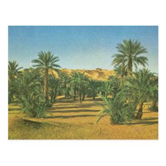 Palmen, Wadi-EL Adjal, Libyen Postkarte